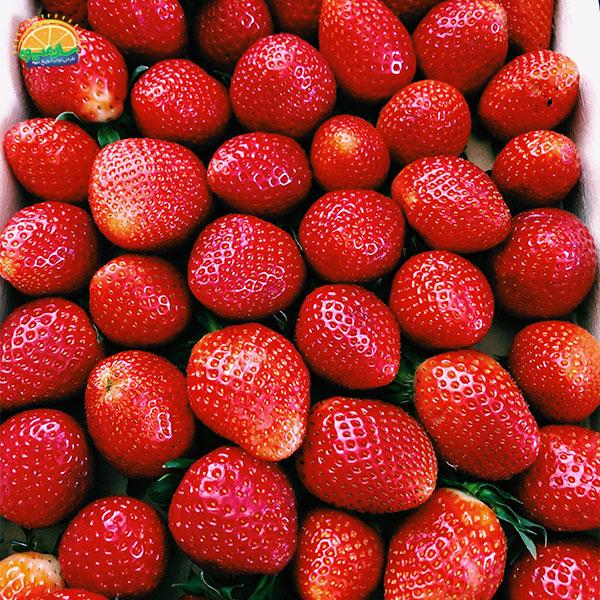 لیست میوههای خونساز: 15. توت فرنگی؛ خوشمزه و دشمن کم خونی و دیابت