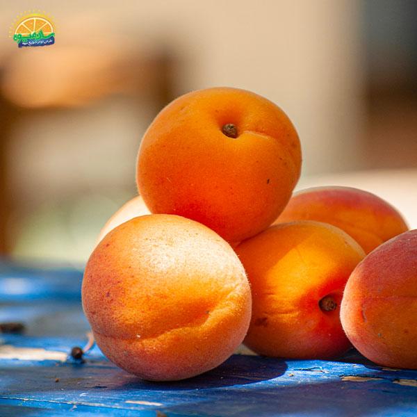 بهترین میوهها برای درمان آنمی: 14. زردآلو از بهترین میوهها برای رفع کم خونی در زنان