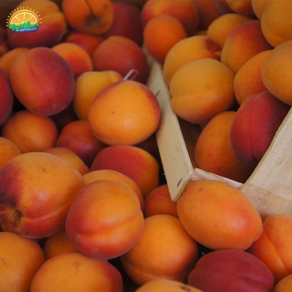 زردآلو میوهای مفید برای دیابت