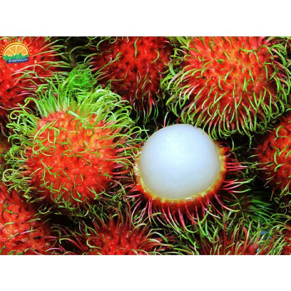 مژکی یا رامبوتان یکی از عجیبترین میوهها در جهان