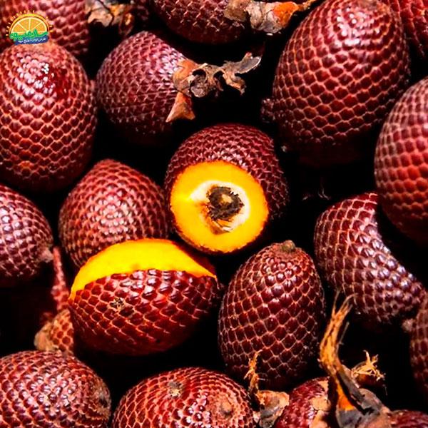 میوهی نخل موریچ - عجیب ترین میوه های دنیا