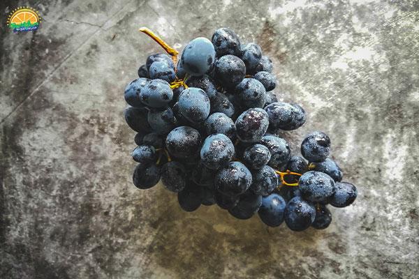 معرفی میوه های پاییزی: 6. انگور ضامن سلامتی و زیبایی