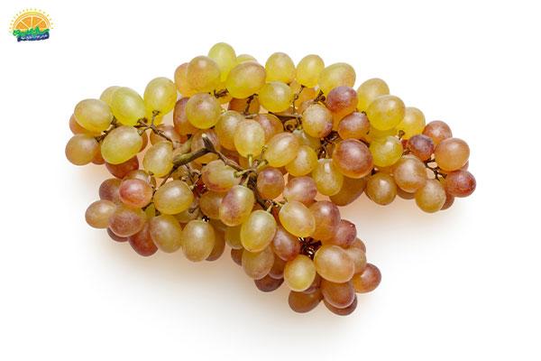 نحوهی انتخاب میوه پاییزی انگور