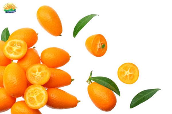 نحوهی انتخاب میوه پاییزی کامکوات