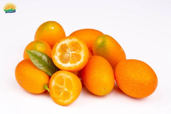 اسامی میوه های پاییزی: 8. کامکوات پرتقال مینیاتوری