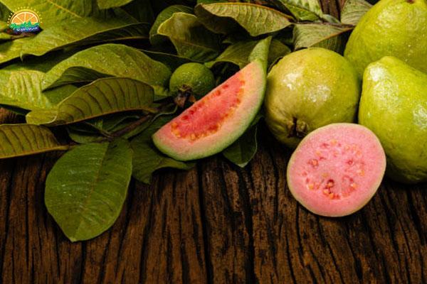 معرفی میوه های پاییزی: 7. گواوا و کاهش وزن
