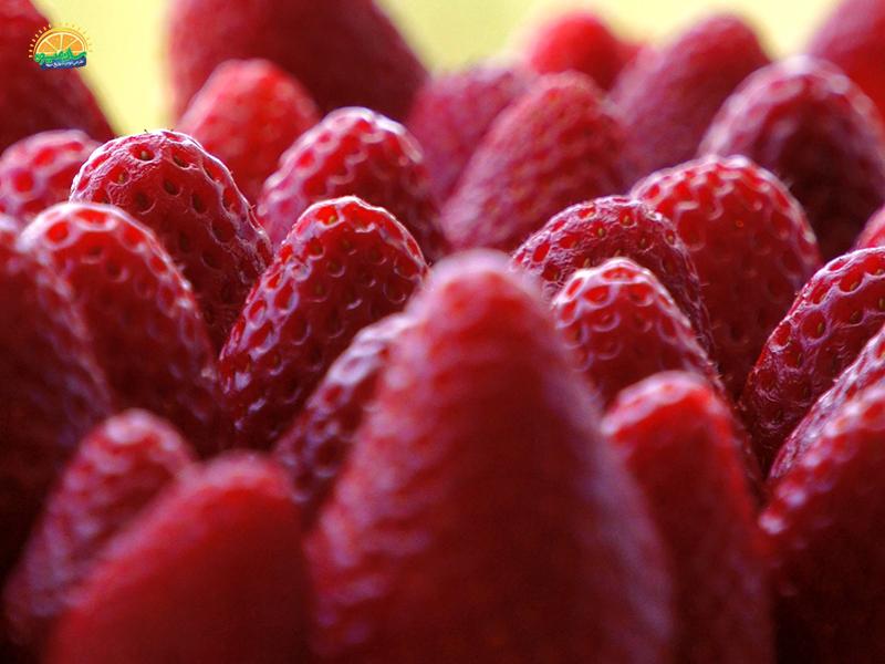 با استفاده از خواص توت فرنگی برای افزایش اسپرم به جنگ نازایی بروید