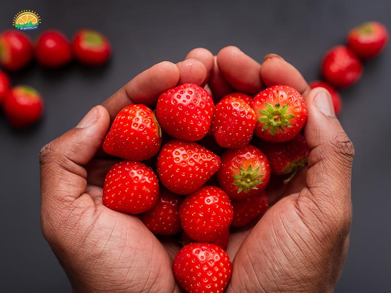 سلامت کلیه ها با خوردن توت فرنگی